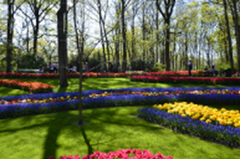 Landscaping with flower beds, trees and perfect grown lawn in Keukenhof, The Netherlandss
